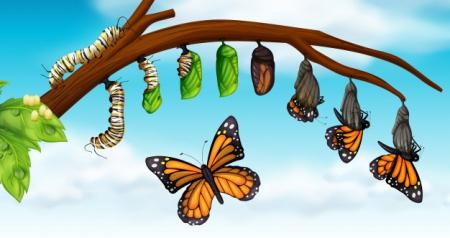 Motyle – latające kwiaty