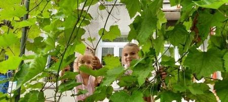 Sierpień w naszym ogrodzie