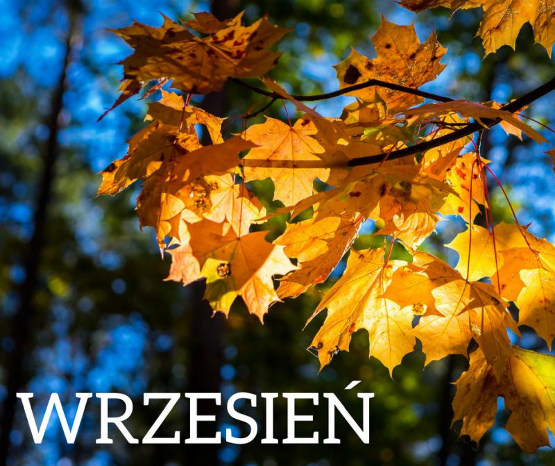 Zamierzenia opiekuńczo-wychowawczo-dydaktyczne na wrzesień