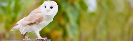 Zielone lekcje - spotkanie z ptakami