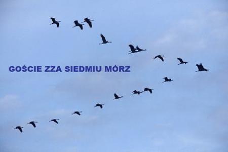 GOŚCIE ZZA SIEDMIU MÓRZ...