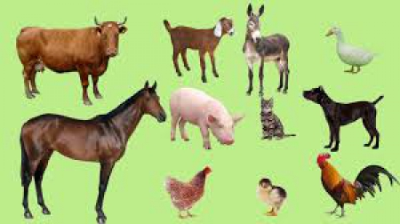 Zwierzęta z podwórka