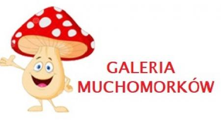 GALERIA  MUCHOMORKÓW